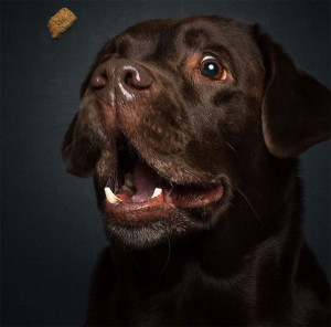 1-chien-croquettes