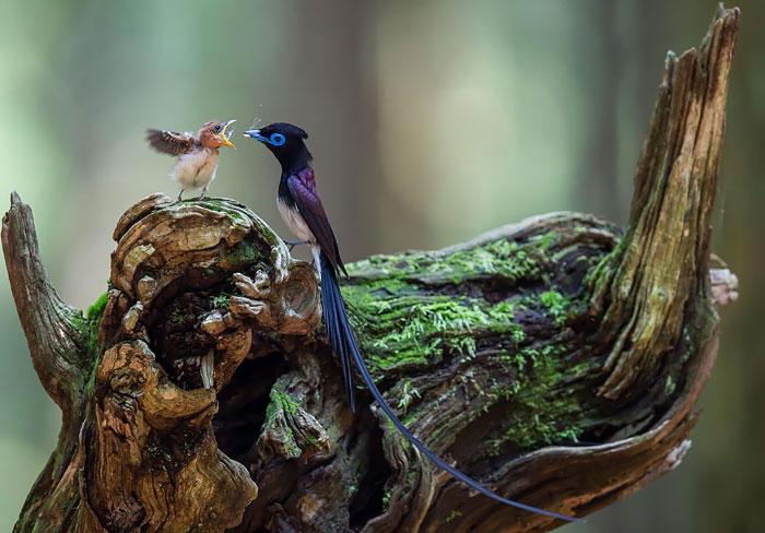 1-oiseaux-bebes