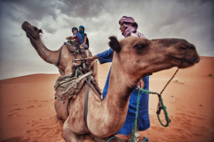 1-voyage-chameau