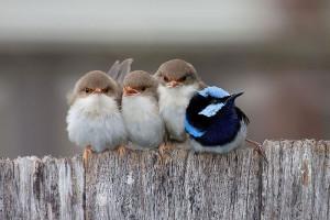 10-oiseaux-bebes