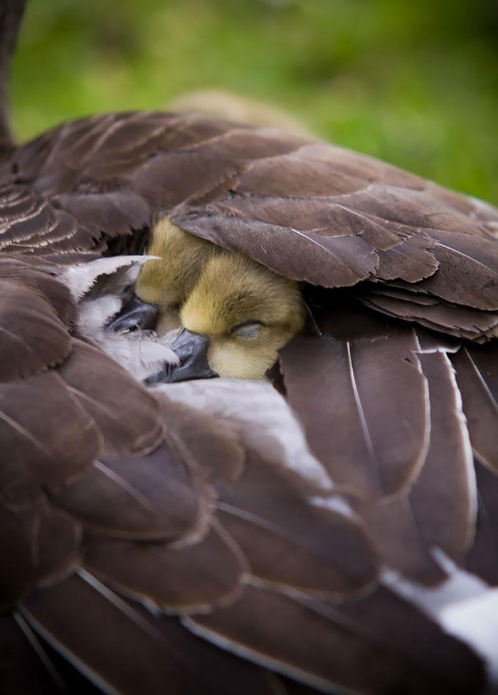 12-oiseaux-bebes