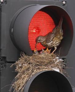 13-oiseaux-bebes