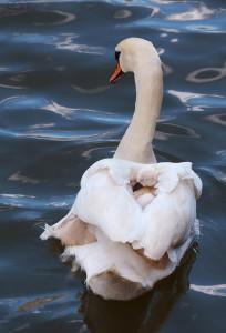 14-oiseaux-bebes