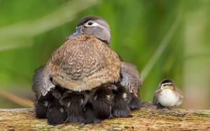 15-oiseaux-bebes