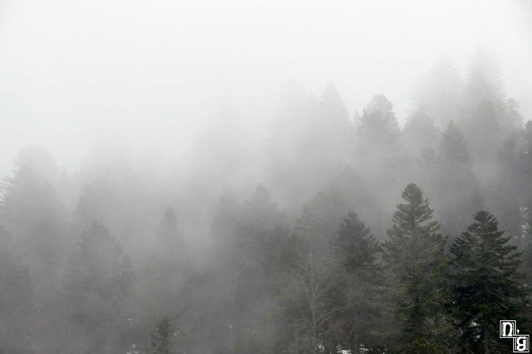 forêt-Auvergne