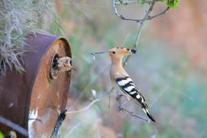 16-oiseaux-bebes