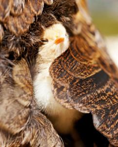 17-oiseaux-bebes