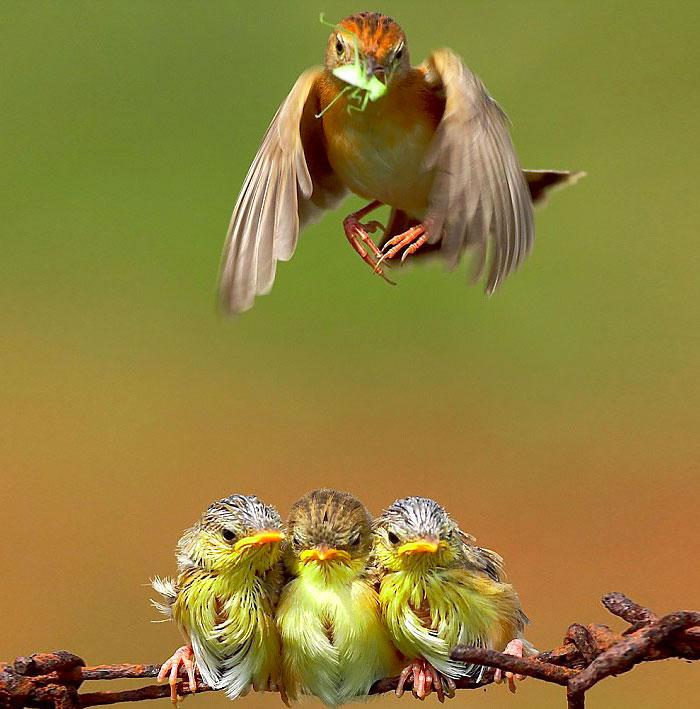 18-oiseaux-bebes