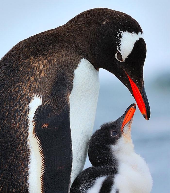 19-oiseaux-bebes