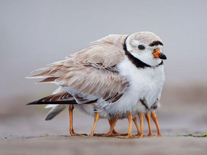 2-oiseaux-bebes