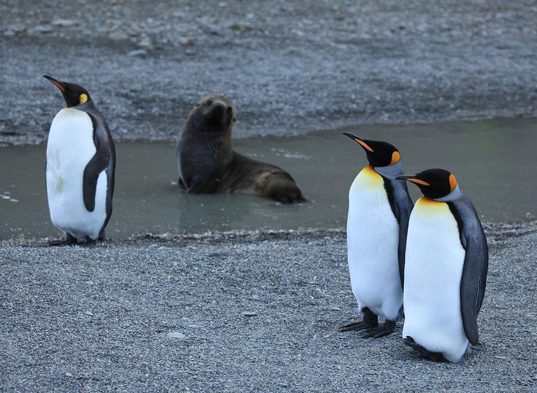 2-pingouins-otaries