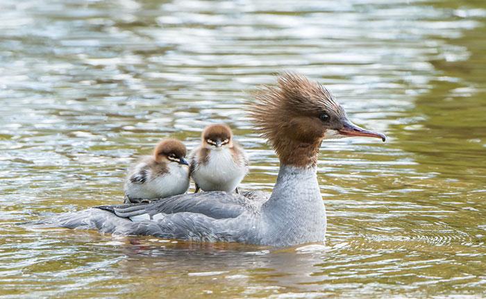 20-oiseaux-bebes
