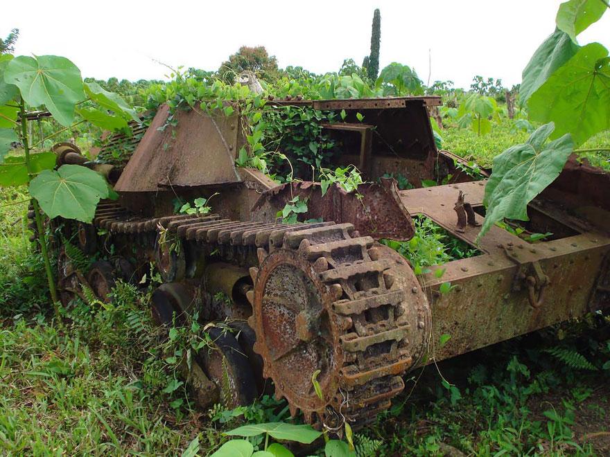 20-tank-nature