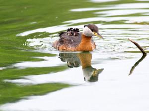 21-oiseaux-bebes