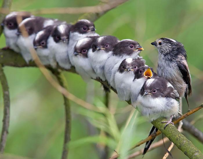 22-oiseaux-bebes