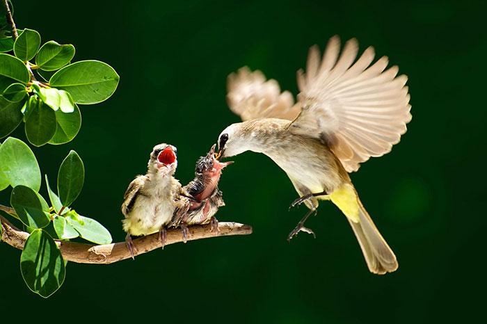 23-oiseaux-bebes