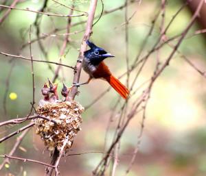 25-oiseaux-bebes