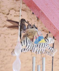 26-oiseaux-bebes