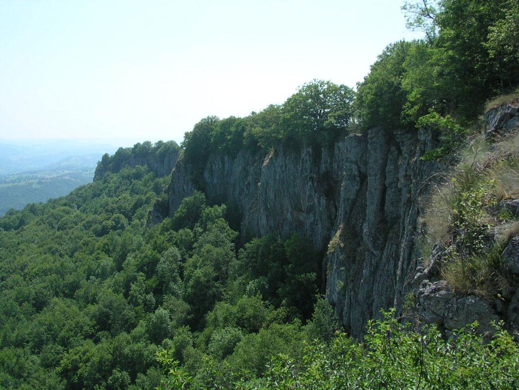 Auvergne-forêt