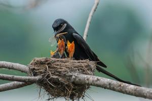 27-oiseaux-bebes