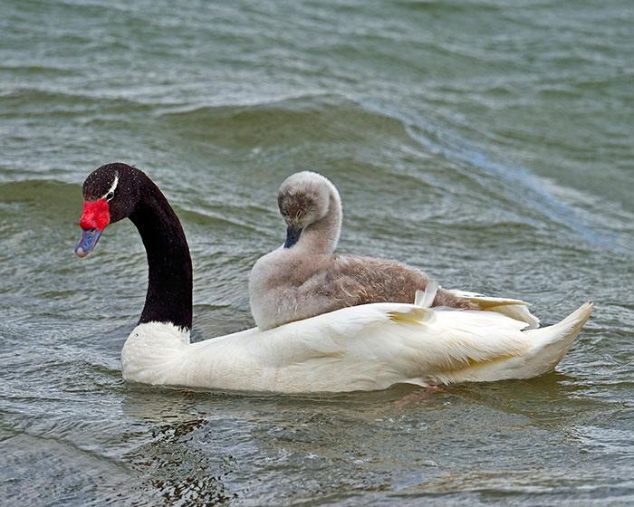 28-oiseaux-bebes
