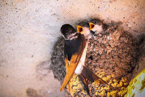 29-oiseaux-bebes