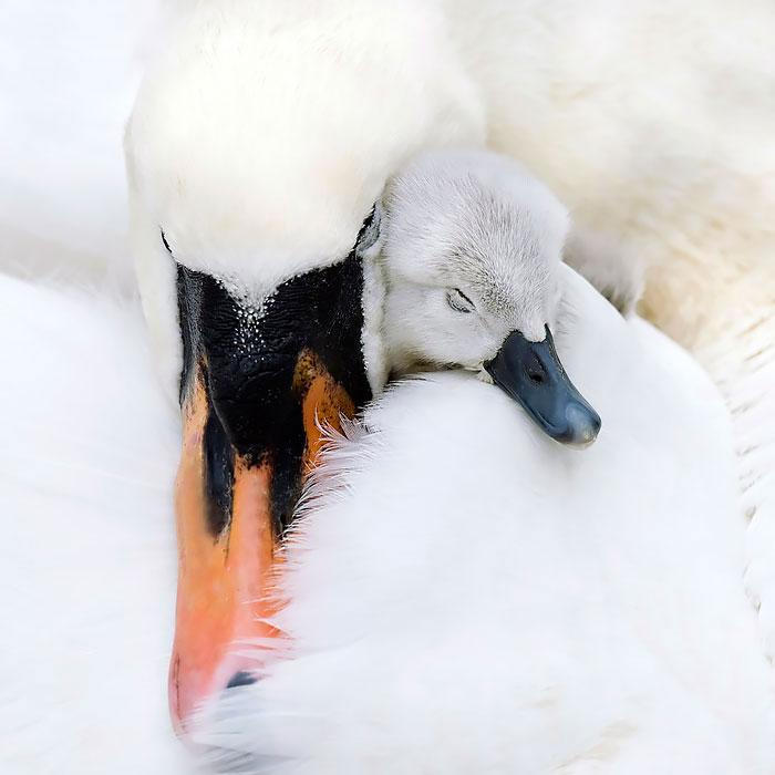 3-oiseaux-bebes