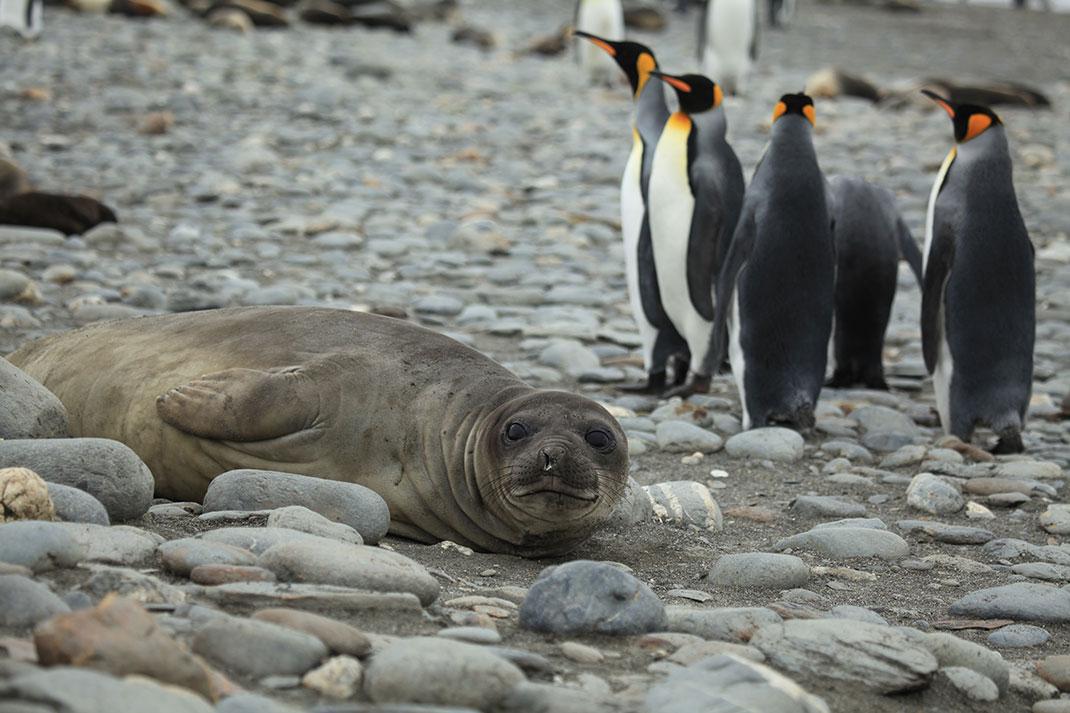 3-pingouins-otaries