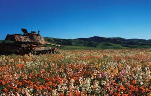 3-tank-nature