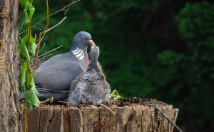 30-oiseaux-bebes