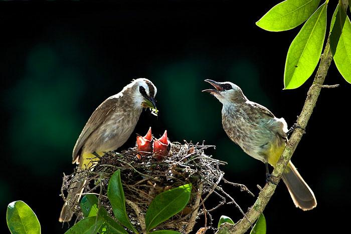 31-oiseaux-bebes