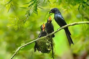 32-oiseaux-bebes