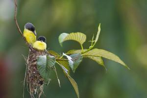 33-oiseaux-bebes