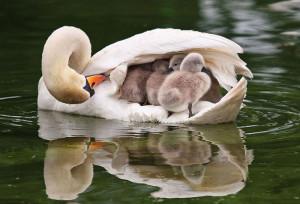 4-oiseaux-bebes