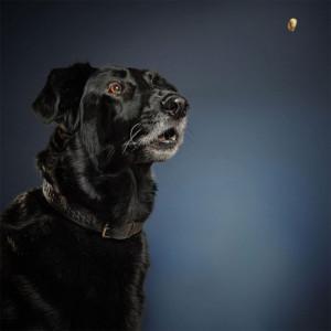 5-chien-croquettes