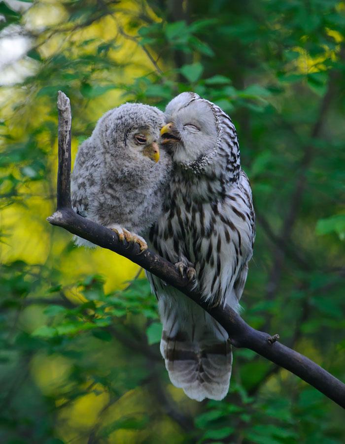 5-oiseaux-bebes