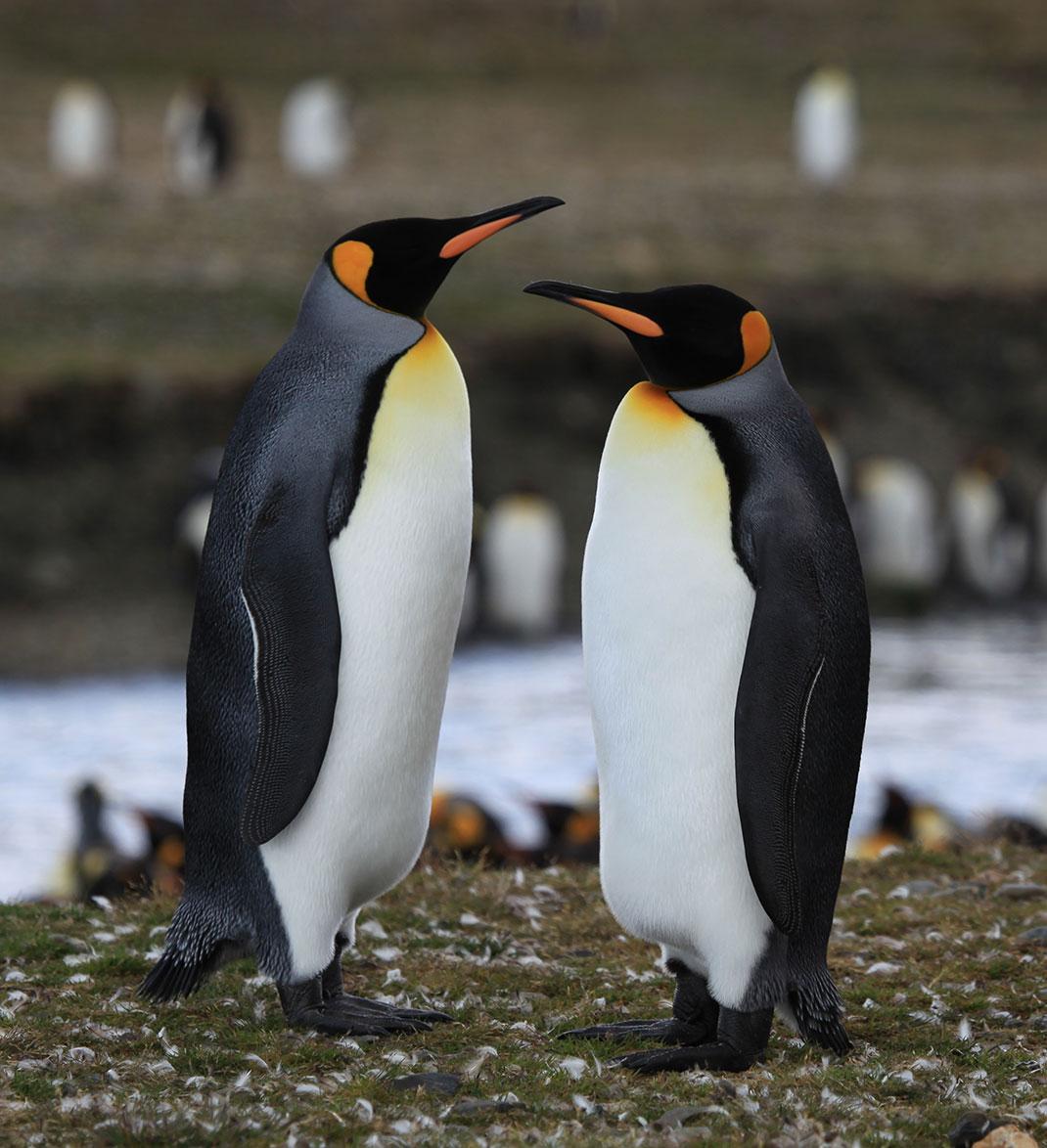 5-pingouins-otaries