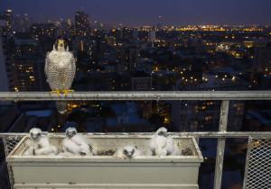 7-oiseaux-bebes