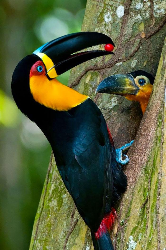 8-oiseaux-bebes