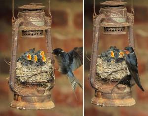 9-oiseaux-bebes