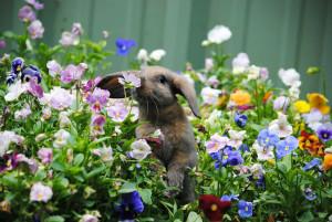 animal-sent-fleur-lapin