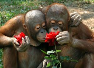 animal-sent-fleur-singes