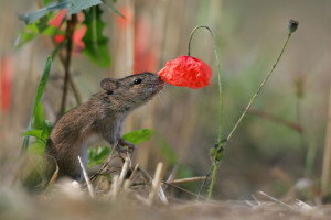 animals-smelling-flowers10
