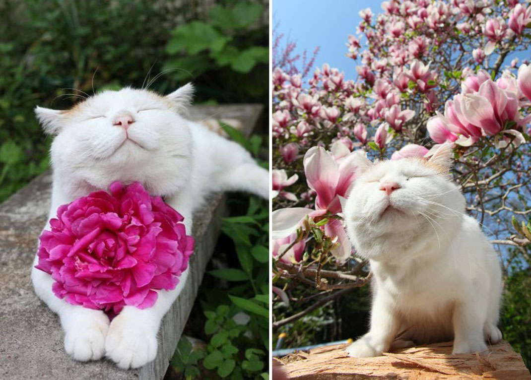 animals-smelling-flowers14