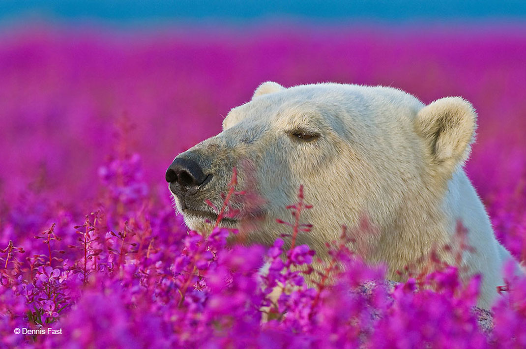 animals-smelling-flowers15