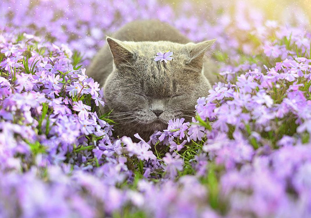 animals-smelling-flowers16