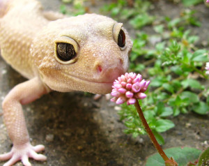 animals-smelling-flowers17