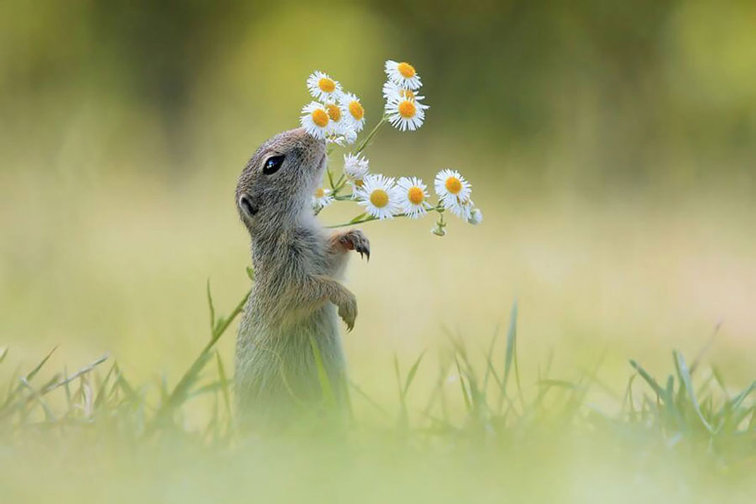 animals-smelling-flowers19
