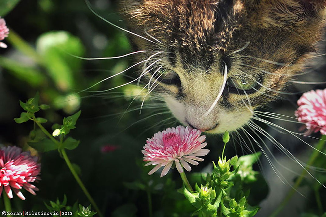 animals-smelling-flowers20