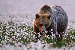animals-smelling-flowers21